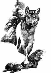 Toppi - Loup